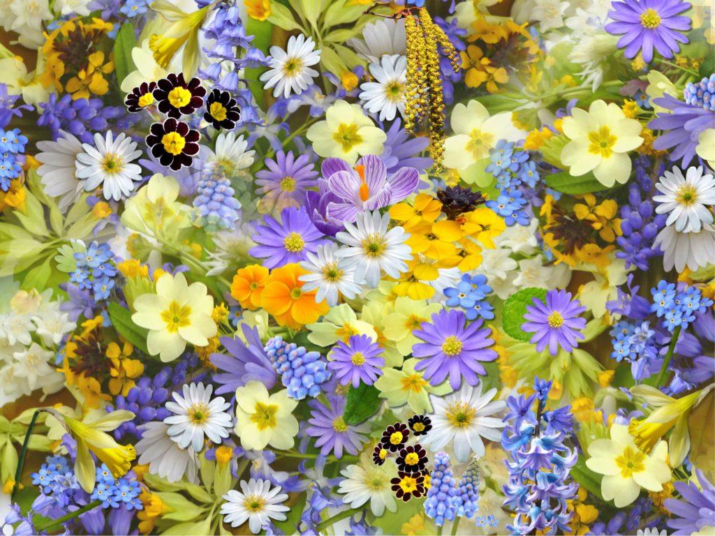 Deze afbeelding heeft een leeg alt-atribuut; de bestandsnaam is flowers-colorful-plants-bloom-68507-1024x768.jpg